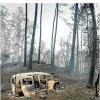 Enésima oleada de incendios provocados (cornisa cantábrica, invierno 2019)