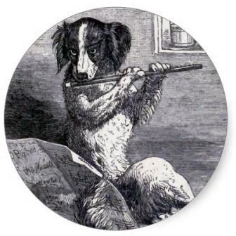 Perro flauta