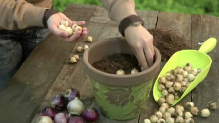 Plantando maceta