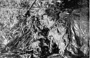 El cuerpo de Dª Margarita Verdú Sánchez fue encontrado en La Haba con el cráneo y hombro destrozados, presentando además el brazo derecho cortado por la articulación del codo